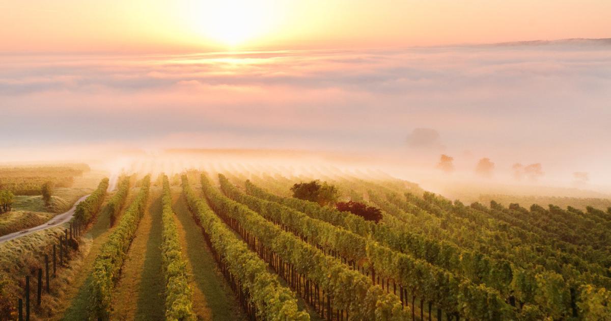 Parfum-Innovation: Poysdorfer Weingarten-Duft liegt in der Luft