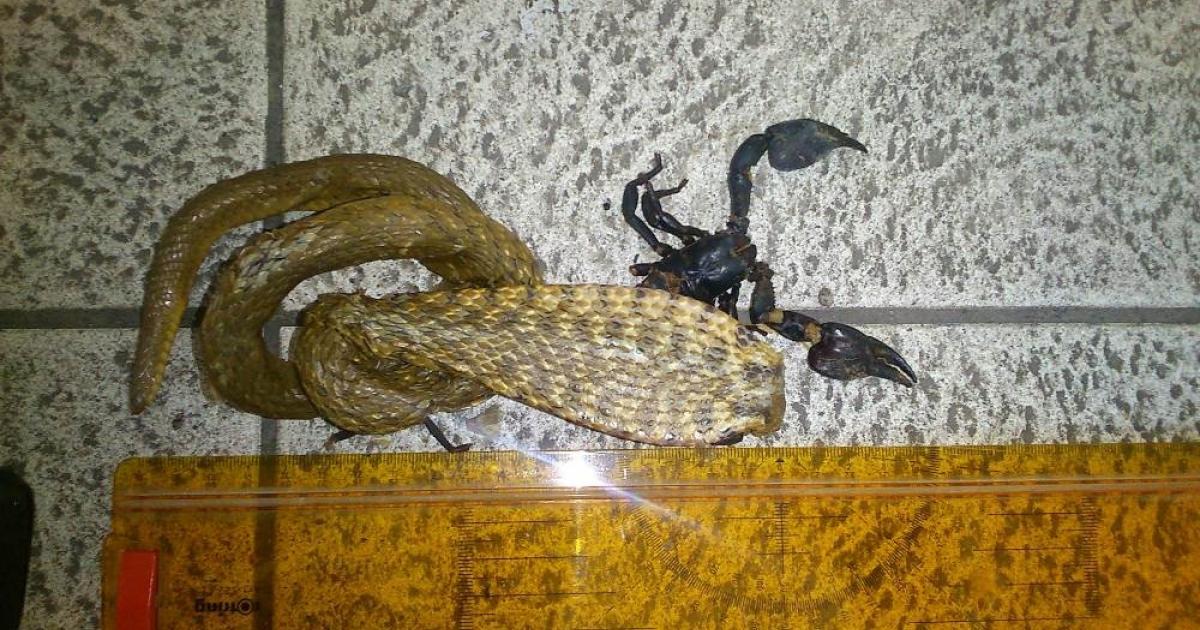 Partnersuche skorpion