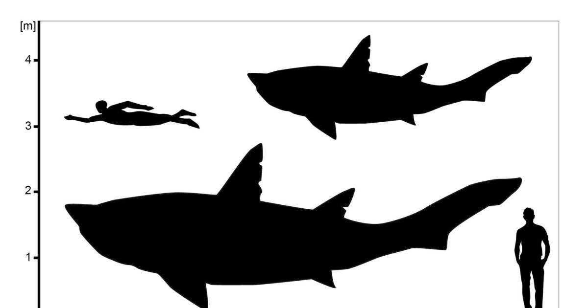 Fossile Wirbel gehörten einem Urzeit-Hai im Teenager-Alter