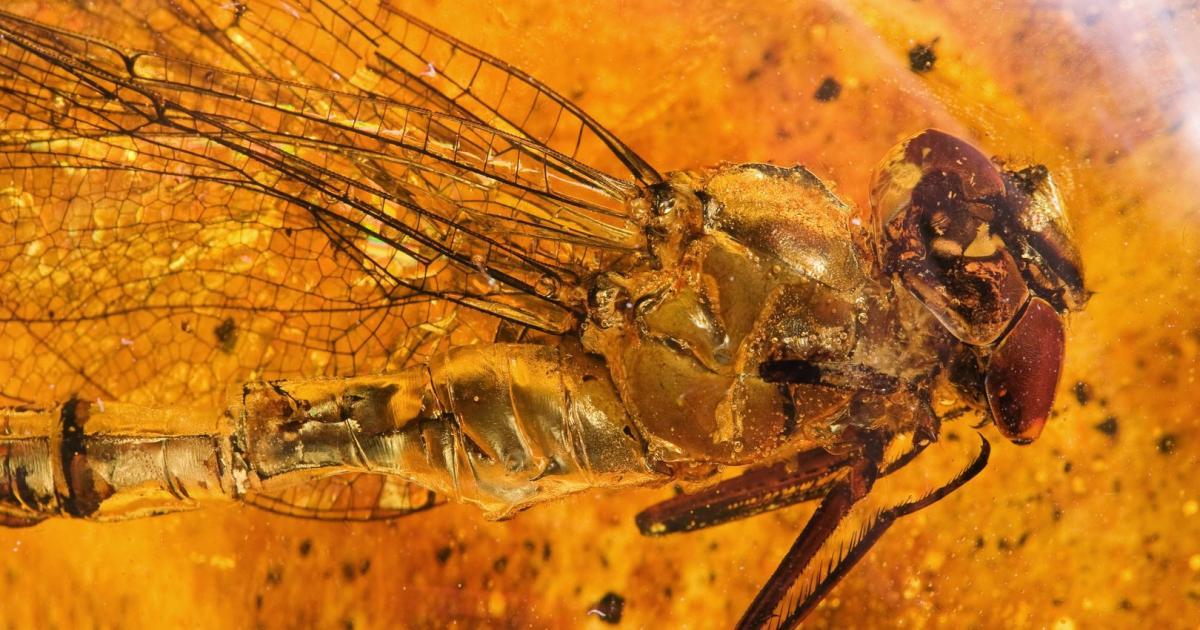 Jurassic Park lässt grüßen: DNA aus in Harz eingeschlossenen Insekten