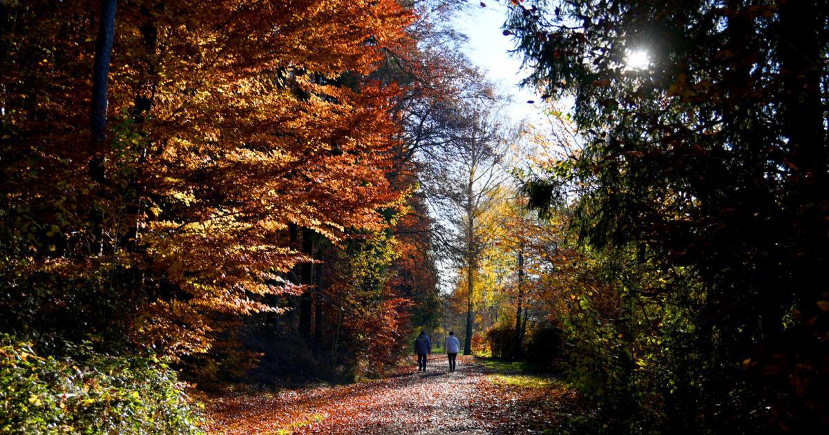 Wie heimische Wälder wieder naturnäher werden