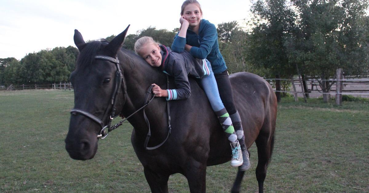 Partnersuche pferdefreunde