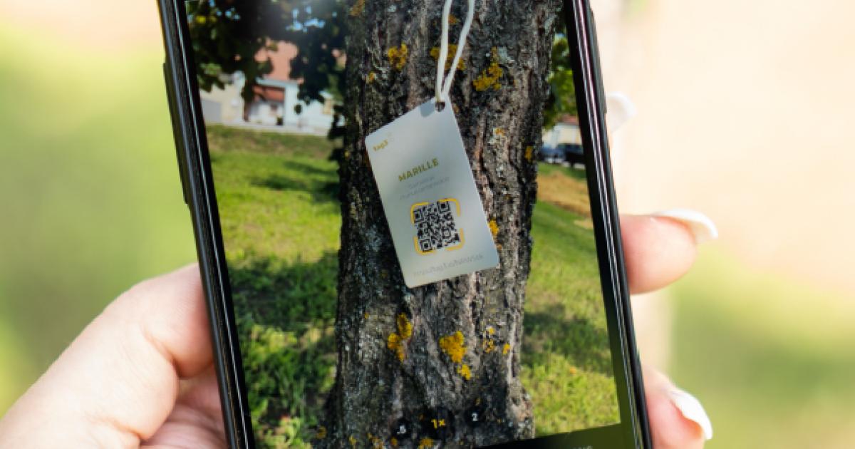 Vom Tagebuch für Bäume zum virtuellen Zollbeamten: So kreativ ist Niederösterreich