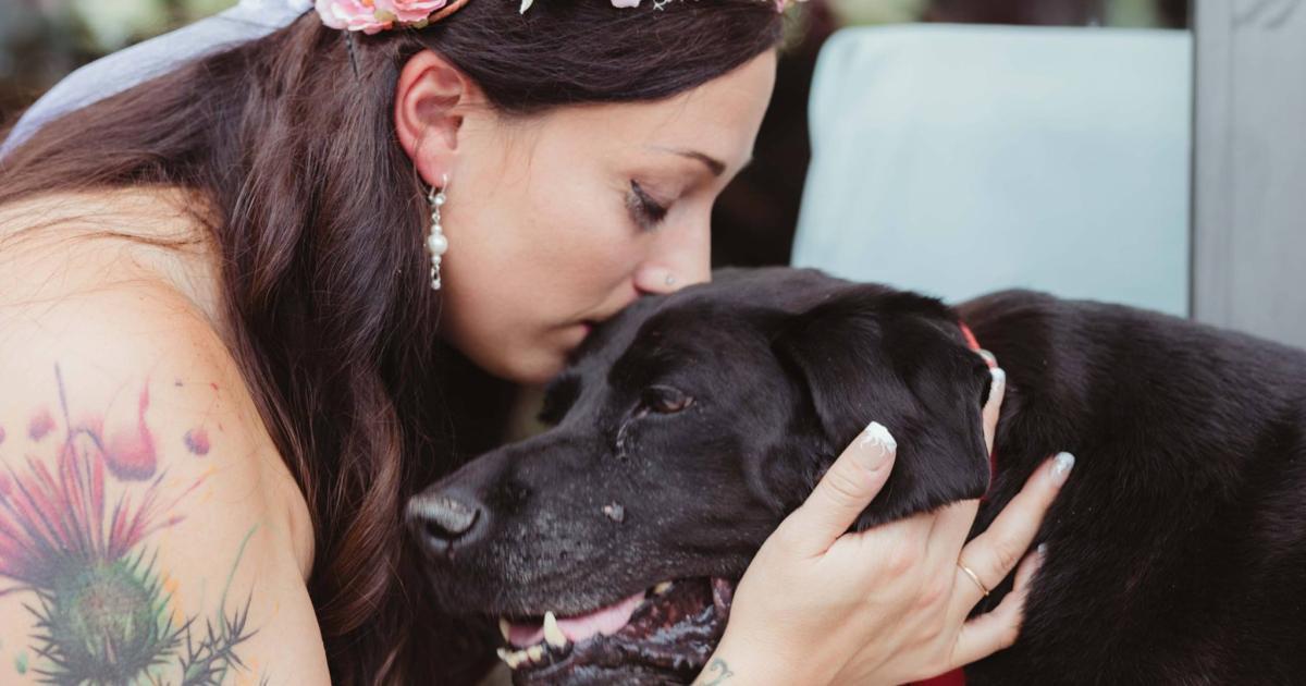 Todkranker Hund begleitet Besitzerin zum Traualtar   kurier.at