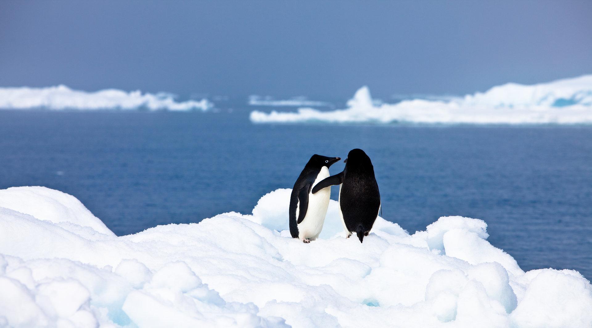 Liebe und Sex: Was der Mensch von den Tieren lernen kann